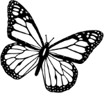butterfly_fly